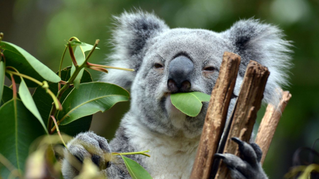 koala-8-20-19.jpg