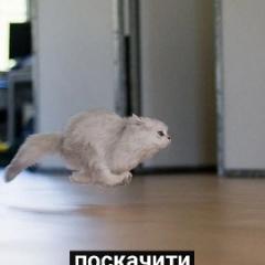Dijoker