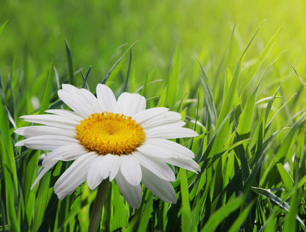 flowers0029.jpg